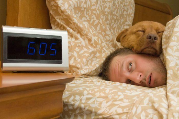 Собака спит на голове у хозяина