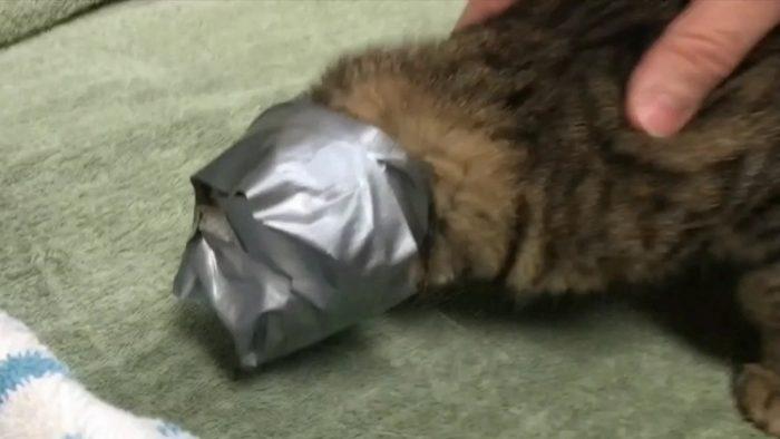 Кошке замотали мордочку скотчем