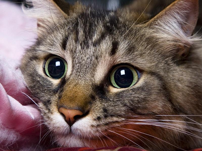 В Канаде спасли кошку, которую замотали скотчем и выкинули на улицу