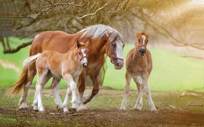 мама-лошадь с жеребятами