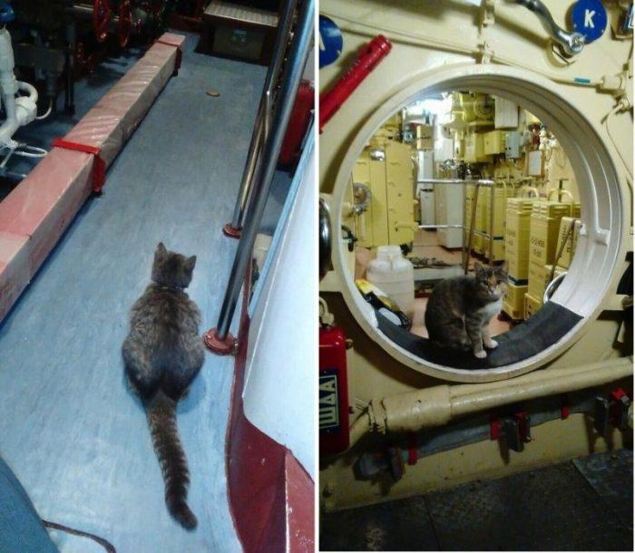 Муся живёт на подводной лодке уже несколько лет