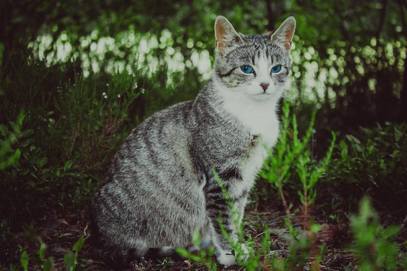 В Новороссийске кошка родила шестерых котят на подводной лодке