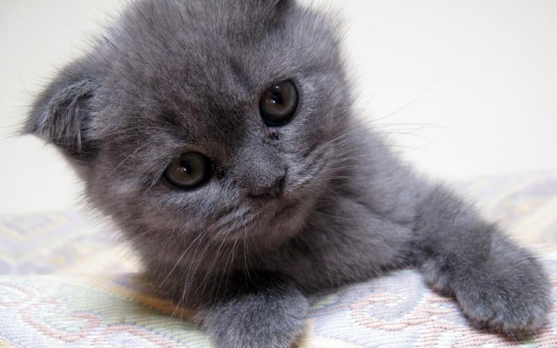 Котёнок не хотел пить молоко, но очень хотел жить