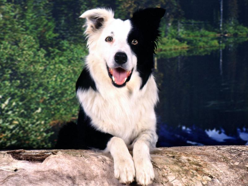 Мужчина из Грузии нашёл свою собаку через три года