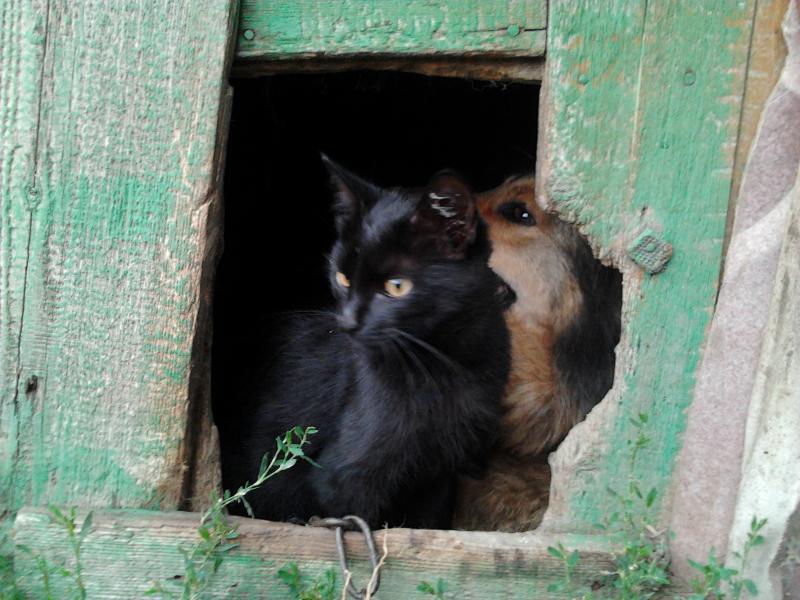 Бездомные котёнок и собака спасались вместе от холода