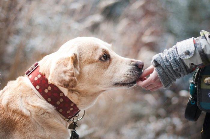 Собаки хотят понять человека