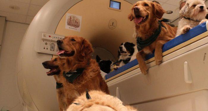 Собакам сделали МРТ