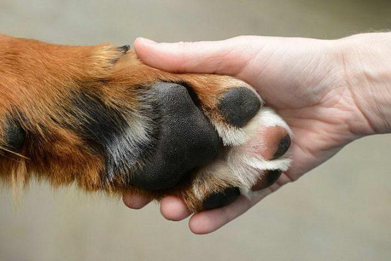 Как мыть лапы собаке после прогулки