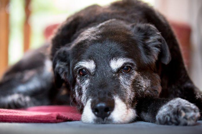 как понять, что собака умирает