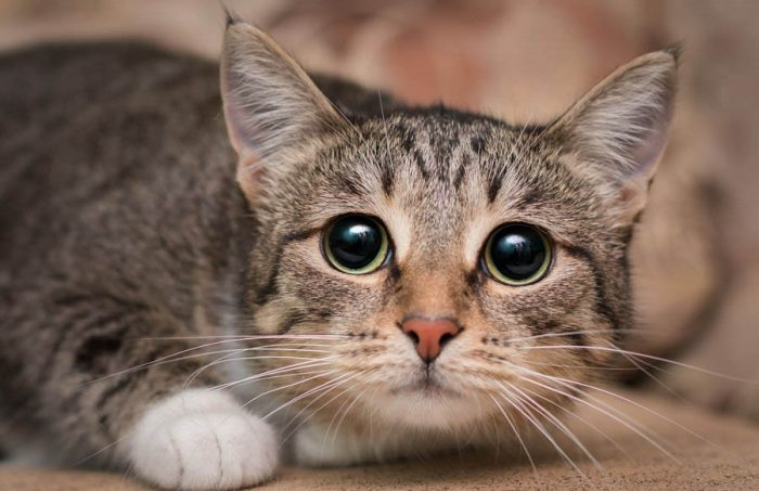 пугливая кошка