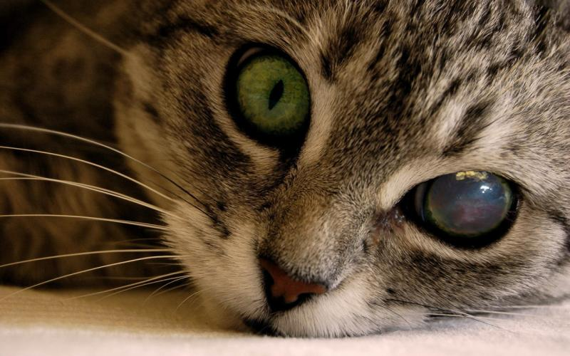 Как понять что кошка ослепла и что делать