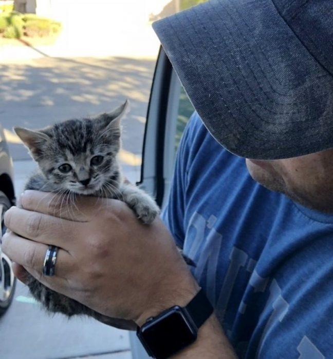 Котёнок на руках мужчины
