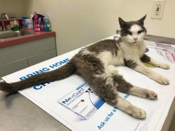 Кошка на приёме у врача