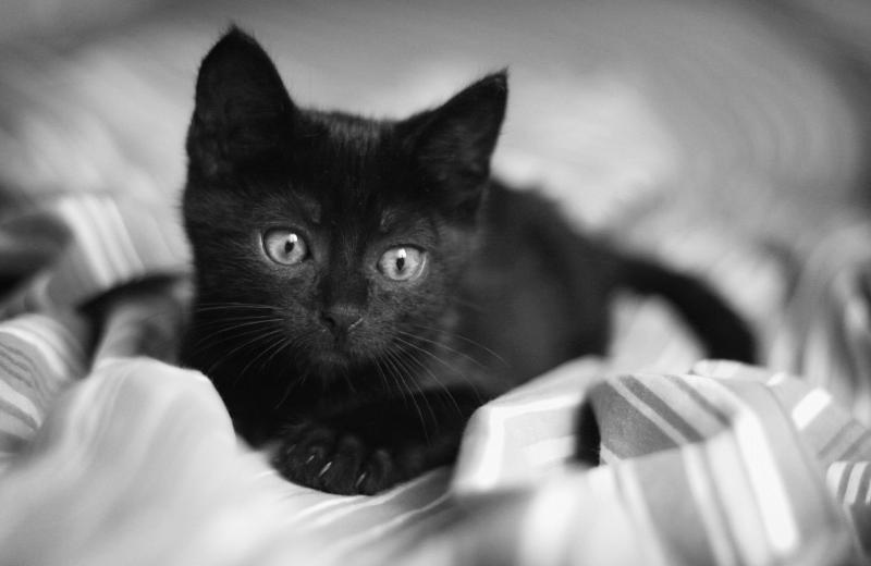 В Индиане спасли котёнка, которого выбросили в мусорном мешке