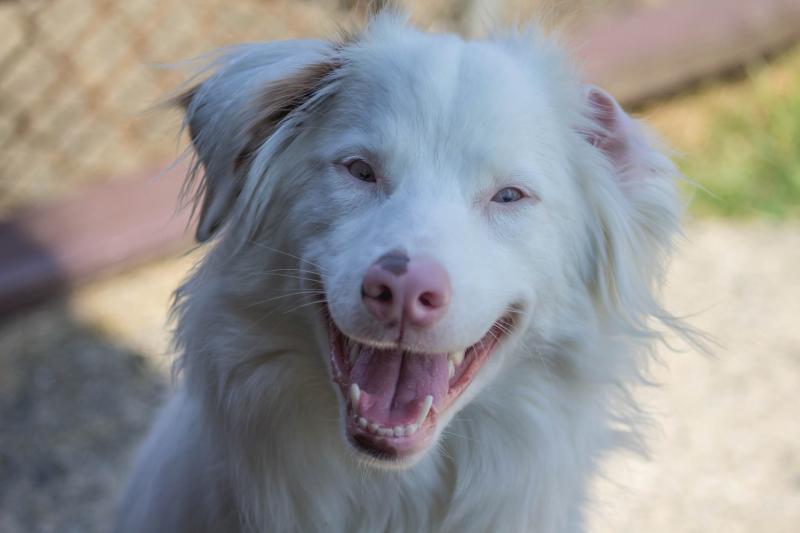 Слепой и глухой пёс ежедневно встречает хозяина с работы