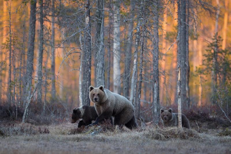 Животный мир таёжного леса