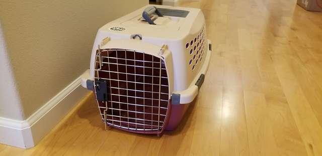 Переноска для котят