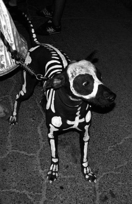 Собака в образе скелета
