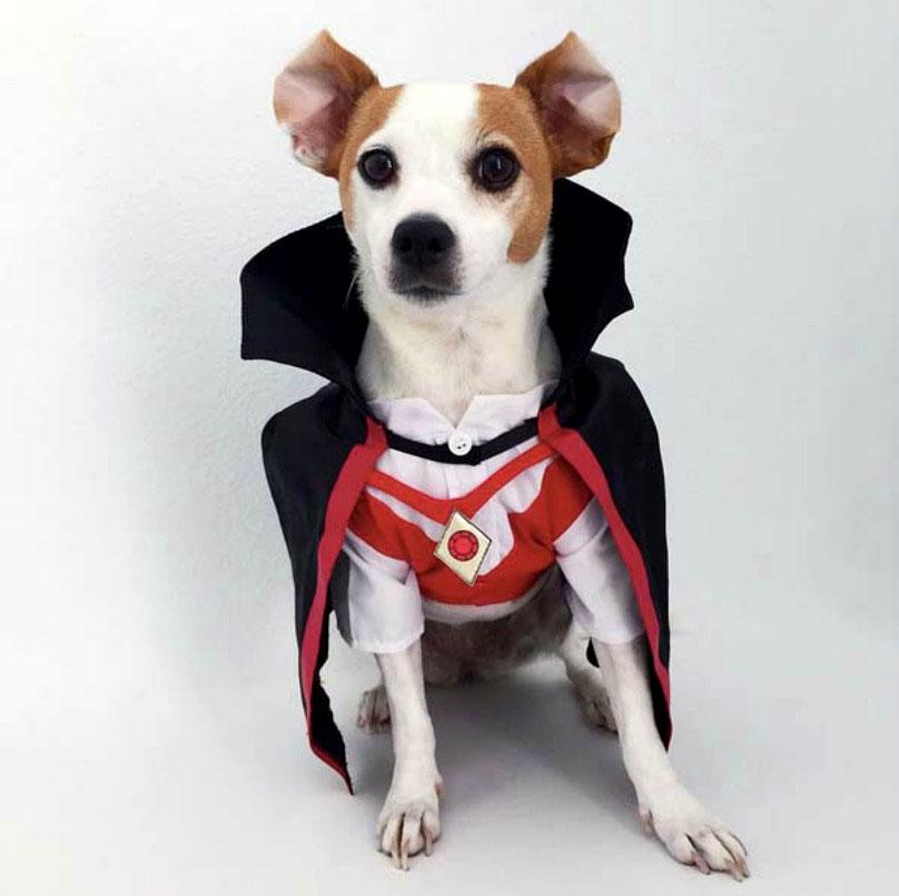 Собака в костюме графа Дракулы