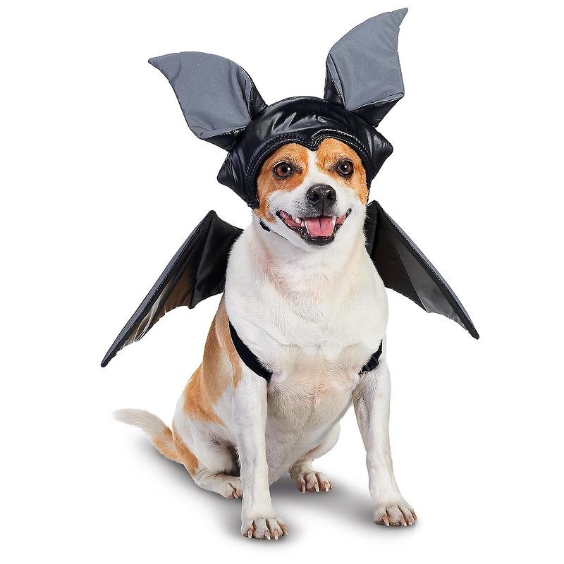 Собака в косюме летучей мыши