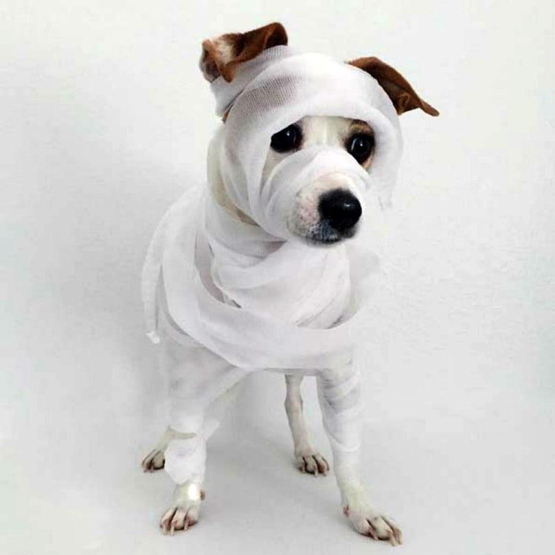Собака в образе мумии