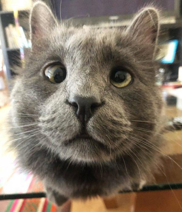 У кота небольшое косоглазие