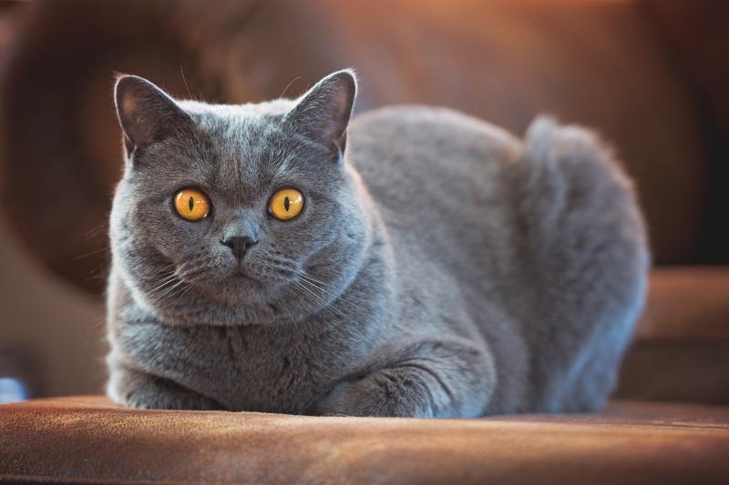 Очаровательный косоглазый кот Беларус