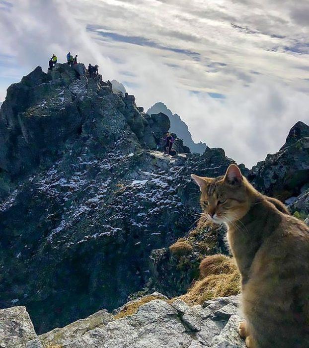 Кот на вершине горы