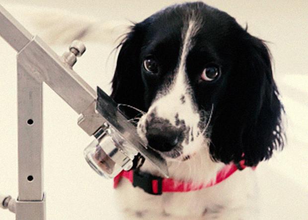 Одна из натренированных собак