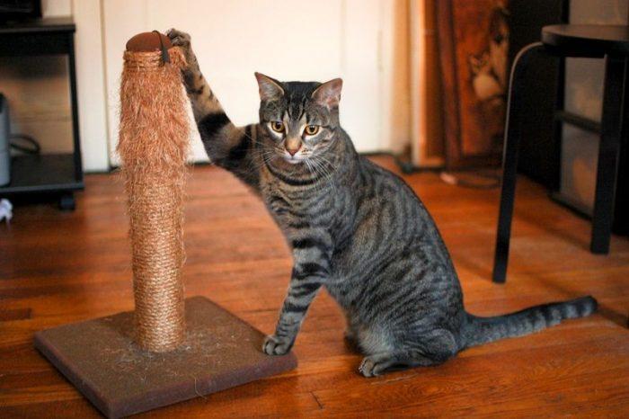 кот с когтеточкой