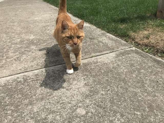 Рыжий кот Боско