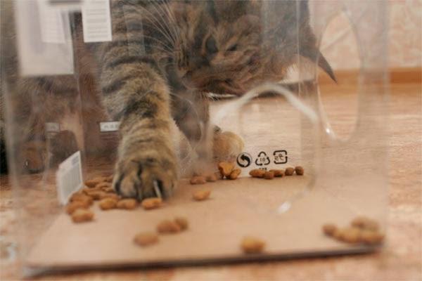 Ещё один вид кошачьей кормушки