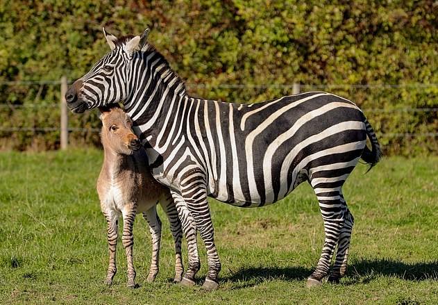 Зиппи со своей мамой