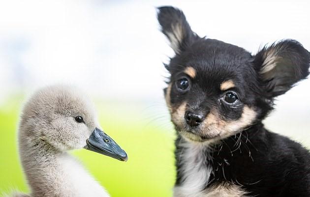 Сидни успел подружиться с маленьким пёсиком