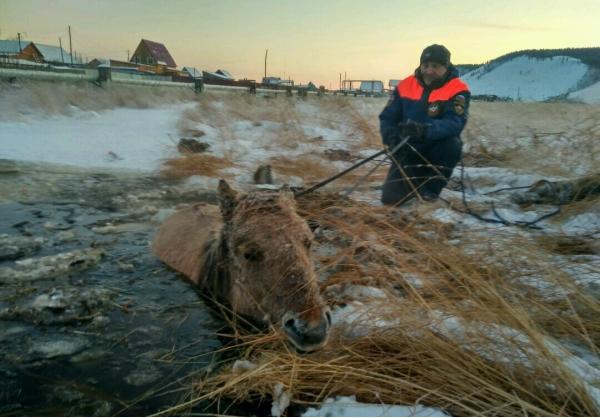 Лошадь и жеребёнок провалились под лёд