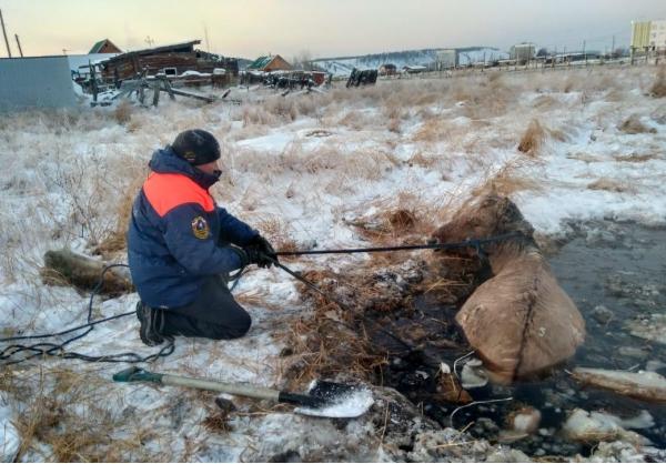 Спасатели вытащили пострадавших животных