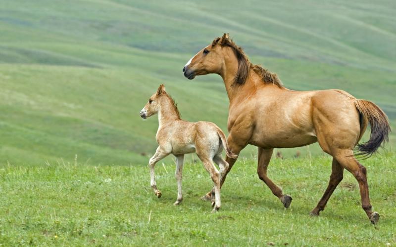 В Якутии спасли лошадей, провалившихся под лёд