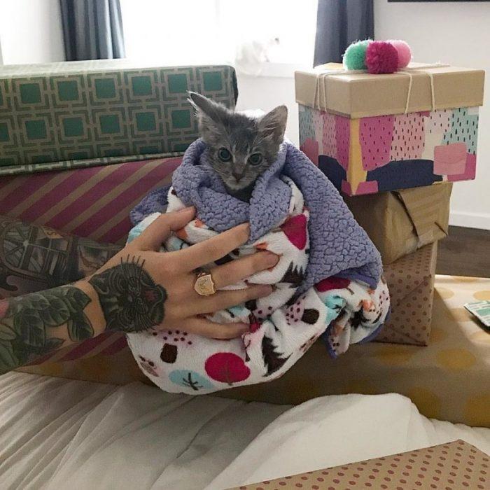 Котёнок завернут в одеяло
