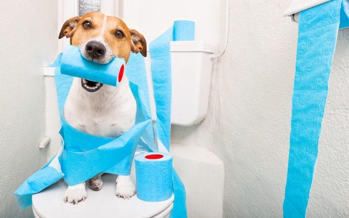 собака на унитазе с туалетной бумагой