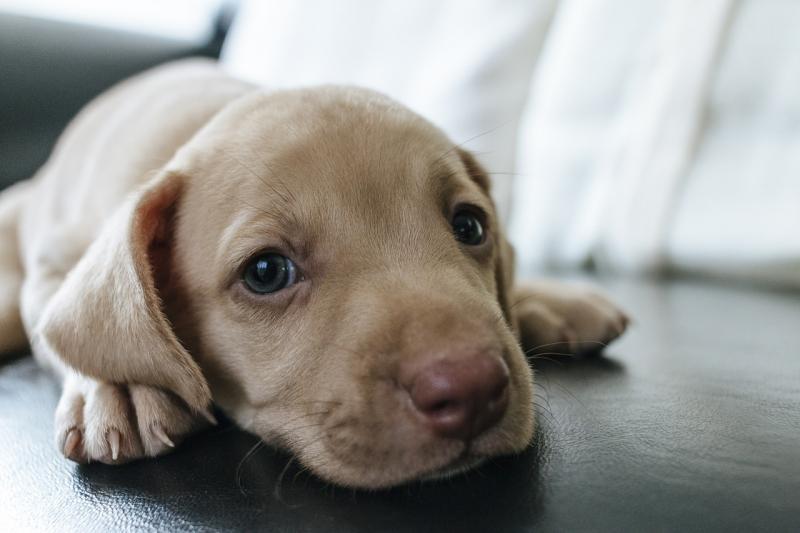 Признаки отравления у собак