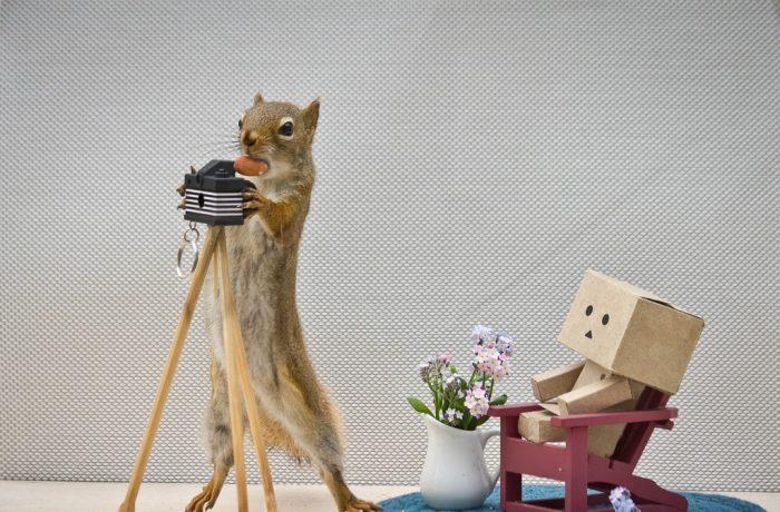белка фотограф