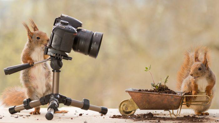 белка фотографирует