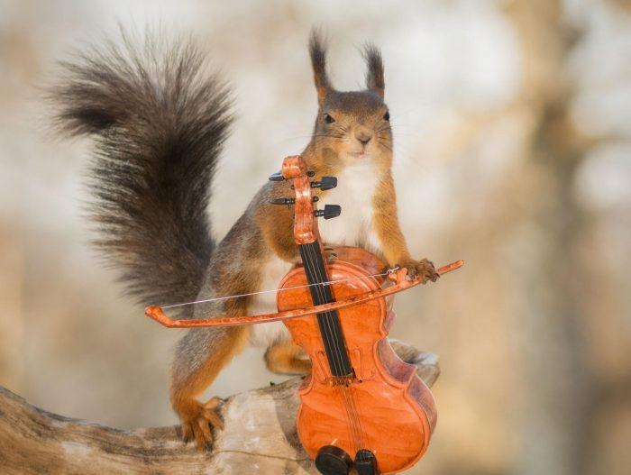 белка и скрипка
