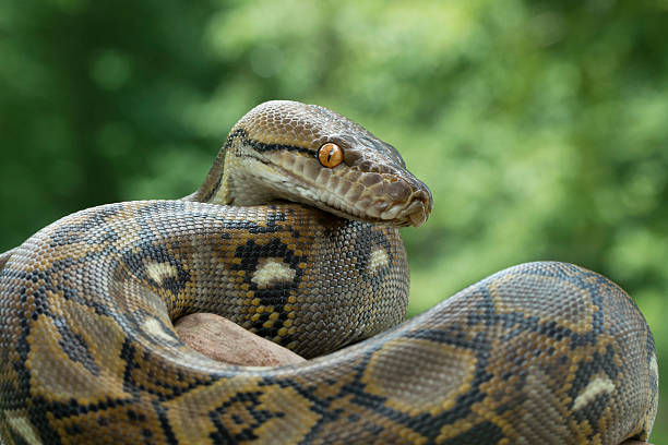 Змея на зелёном фоне