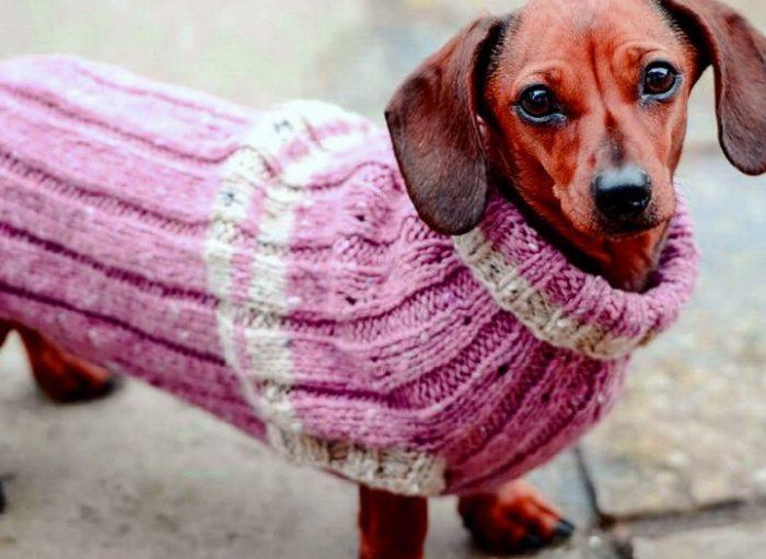Тёплый свитер для таксы
