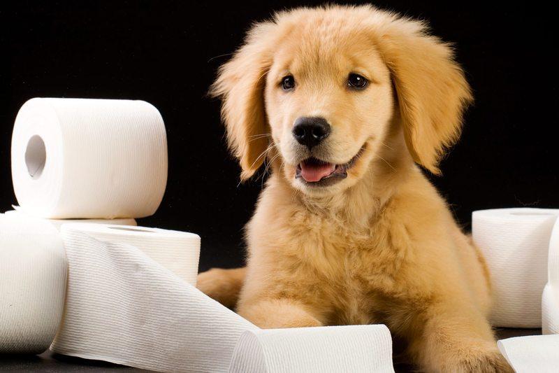 Как отучить щенка гадить дома: терпением и лаской