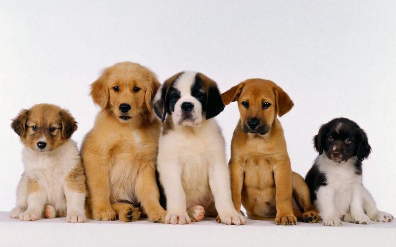 Какую собаку лучше завести в квартире: 5 лучших вариантов