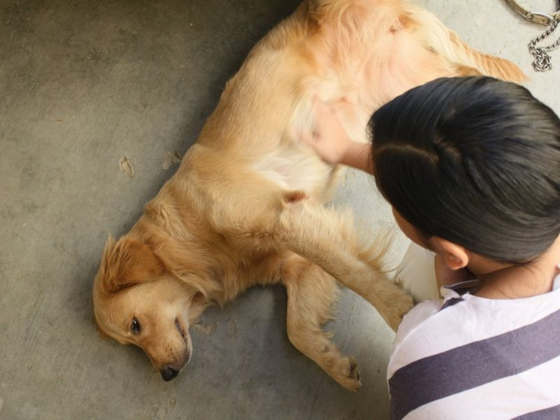 Эпилепсия у собак: виды, симптомы и лечение