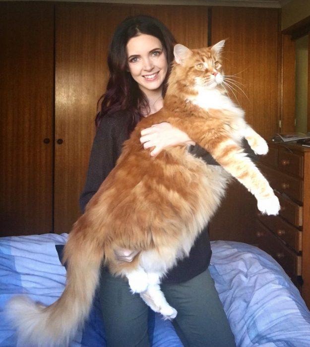 Стефани Херст и её огромный кот