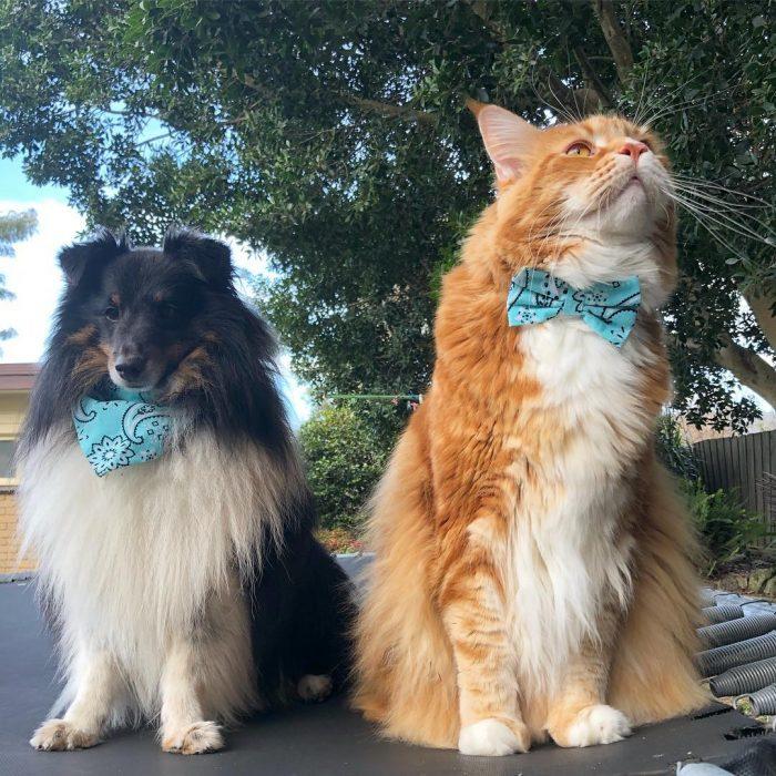Кот Омар и его подружка — собака Пенни